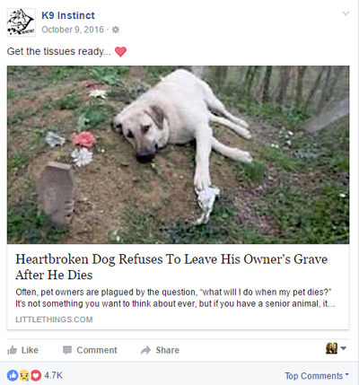 Facebook post about a dog refusing to leave the grave of his owner